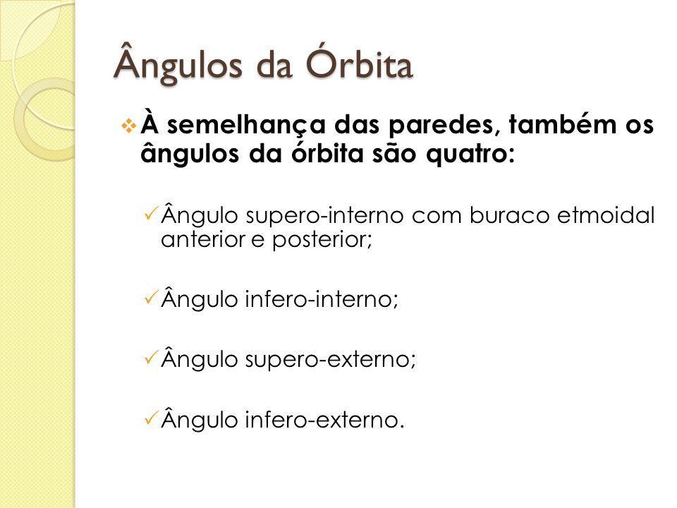 Ângulos da Órbita À semelhança das paredes, também os ângulos da órbita são quatro: