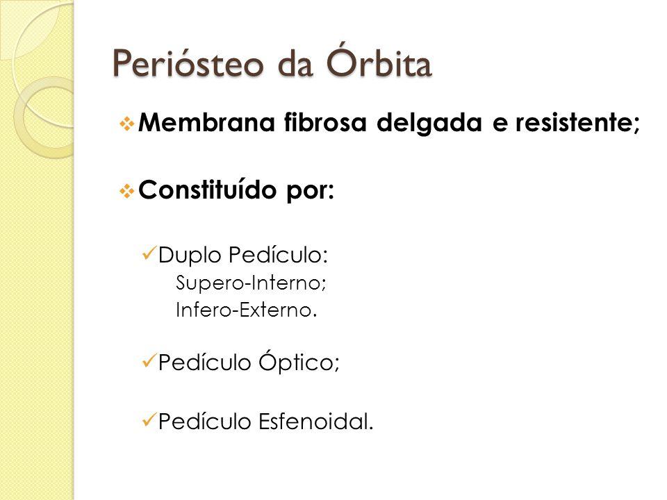 Periósteo da Órbita Membrana fibrosa delgada e resistente;