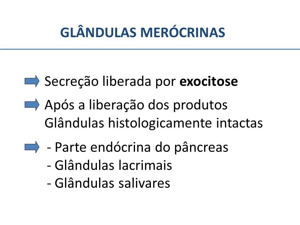 GLÂNDULAS MERÓCRINAS Secreção liberada por exocitose. Após a liberação dos produtos. Glândulas histologicamente intactas.