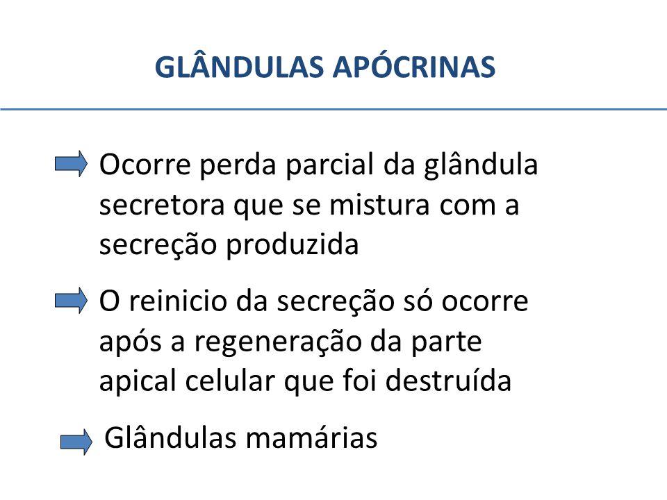 GLÂNDULAS APÓCRINAS Ocorre perda parcial da glândula. secretora que se mistura com a. secreção produzida.
