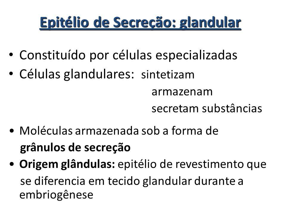 Epitélio de Secreção: glandular