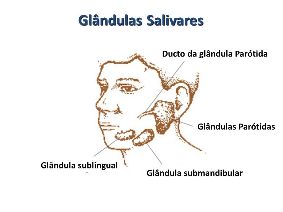 Glândulas Salivares Ducto da glândula Parótida Glândulas Parótidas