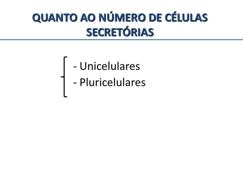 QUANTO AO NÚMERO DE CÉLULAS SECRETÓRIAS