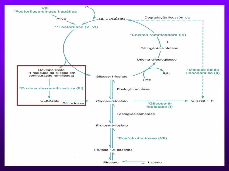 GLICOGENOSE TIPO III Autossômica recessiva.