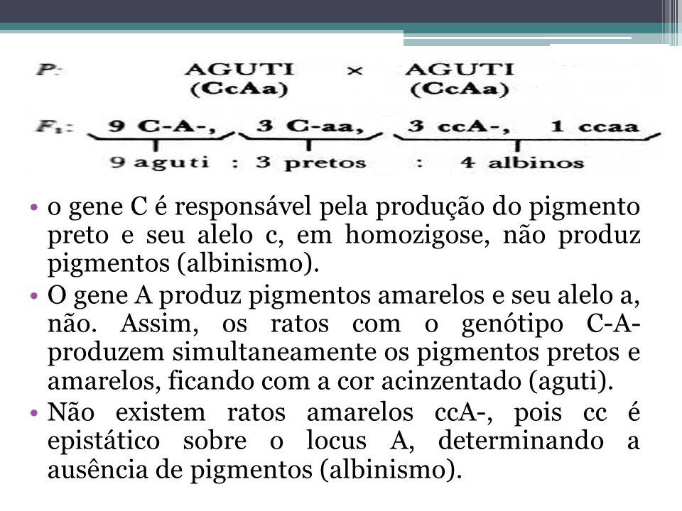o gene C é responsável pela produção do pigmento preto e seu alelo c, em homozigose, não produz pigmentos (albinismo).