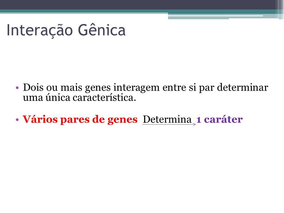 Interação Gênica Dois ou mais genes interagem entre si par determinar uma única característica.