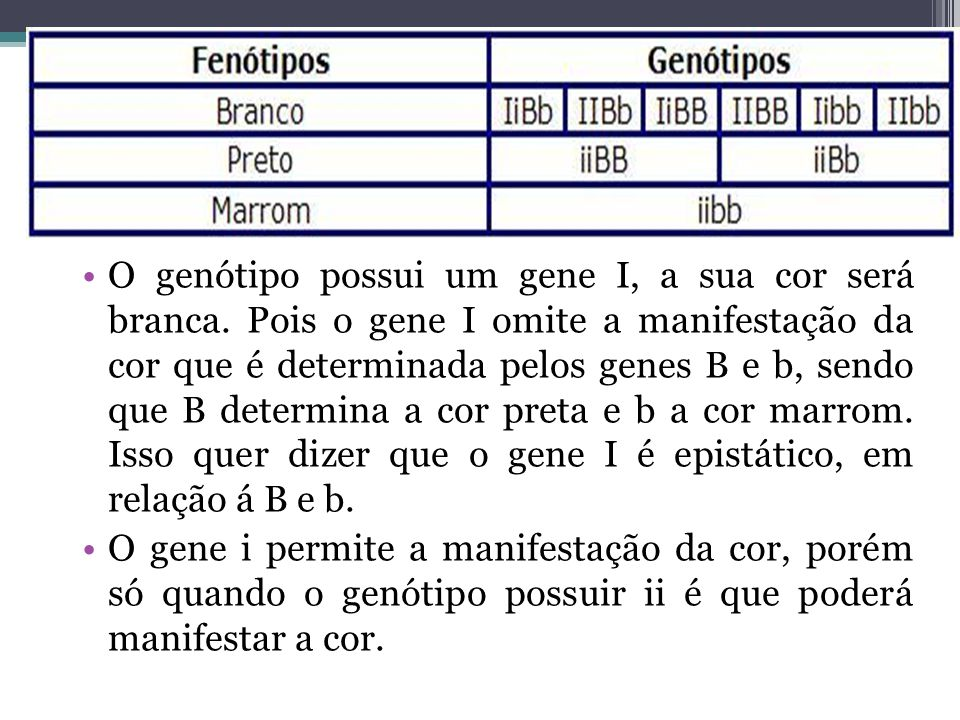 O genótipo possui um gene I, a sua cor será branca