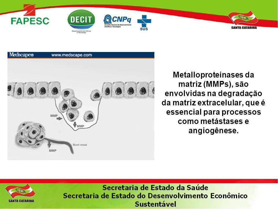 Metalloproteinases da matriz (MMPs), são envolvidas na degradação da matriz extracelular, que é essencial para processos como metástases e angiogênese.