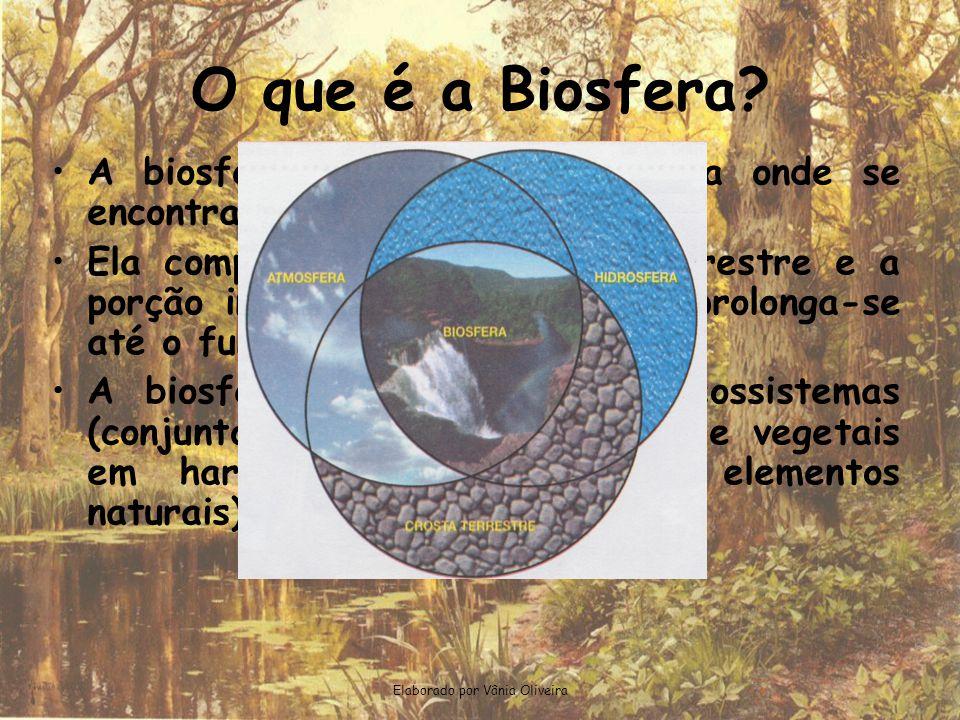 Elaborado por Vânia Oliveira