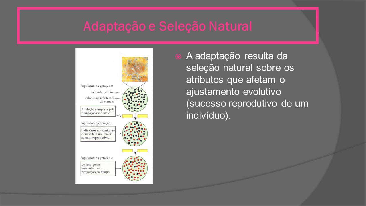 Adaptação e Seleção Natural