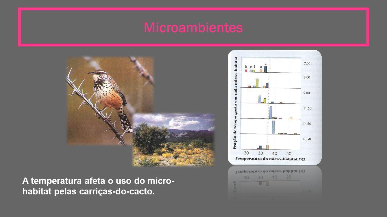 Microambientes A temperatura afeta o uso do micro-habitat pelas carriças-do-cacto.