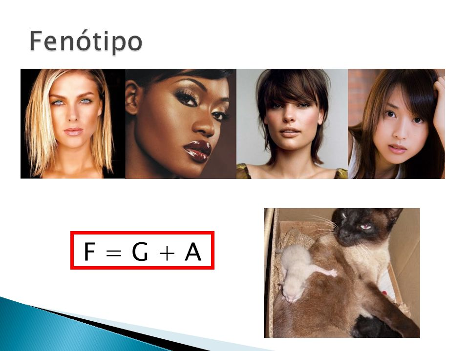 Fenótipo F = G + A