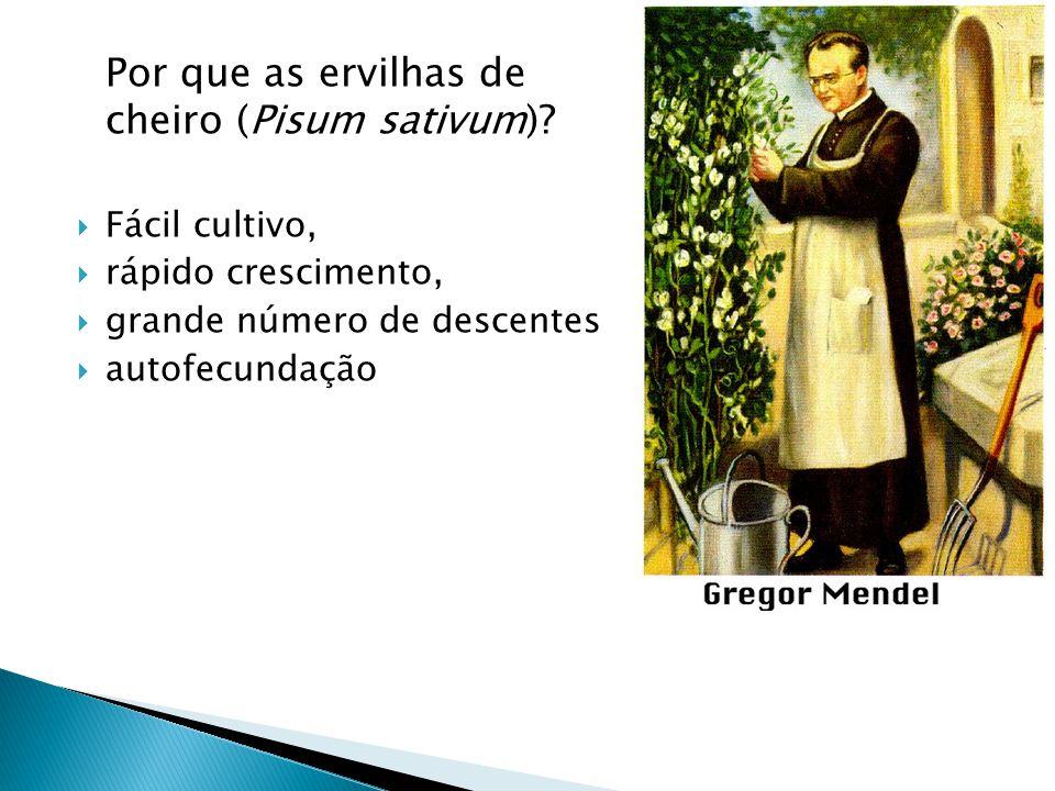 Por que as ervilhas de cheiro (Pisum sativum)