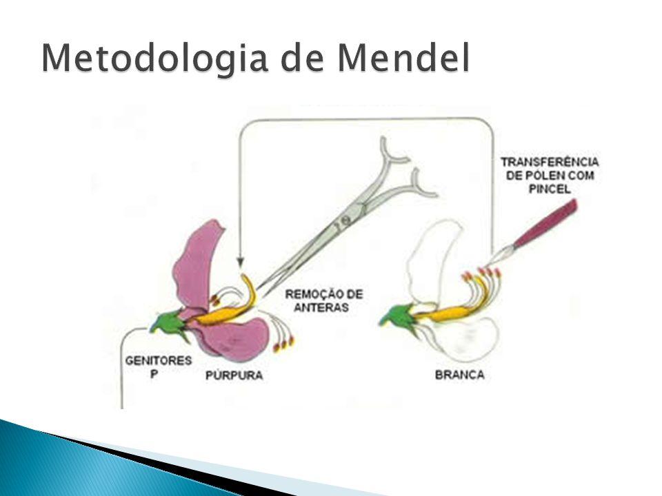 Metodologia de Mendel