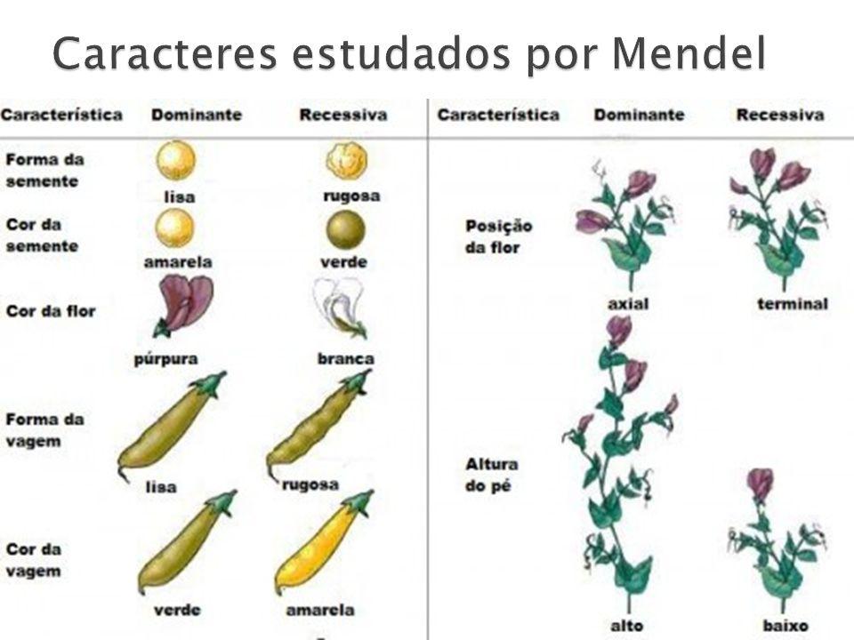Caracteres estudados por Mendel