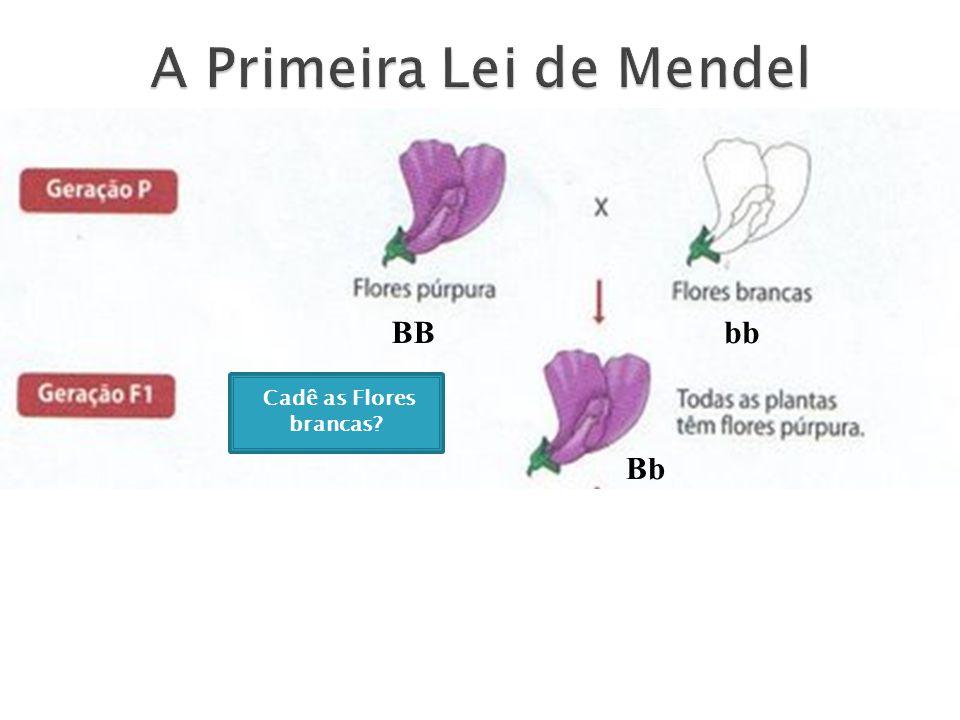 A Primeira Lei de Mendel