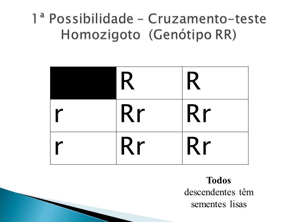 1ª Possibilidade – Cruzamento-teste Homozigoto (Genótipo RR)