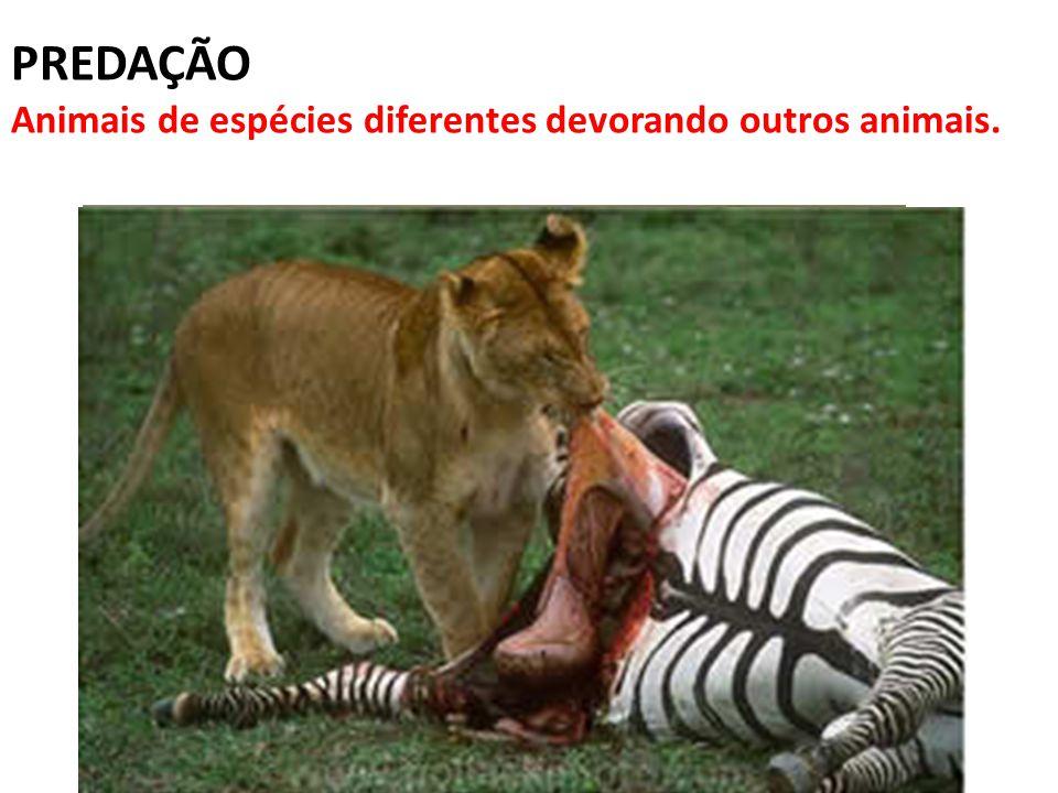 PREDAÇÃO Animais de espécies diferentes devorando outros animais.