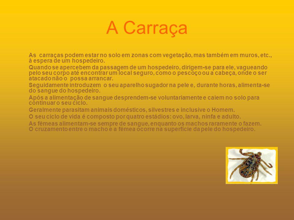 A Carraça As carraças podem estar no solo em zonas com vegetação, mas também em muros, etc., à espera de um hospedeiro.