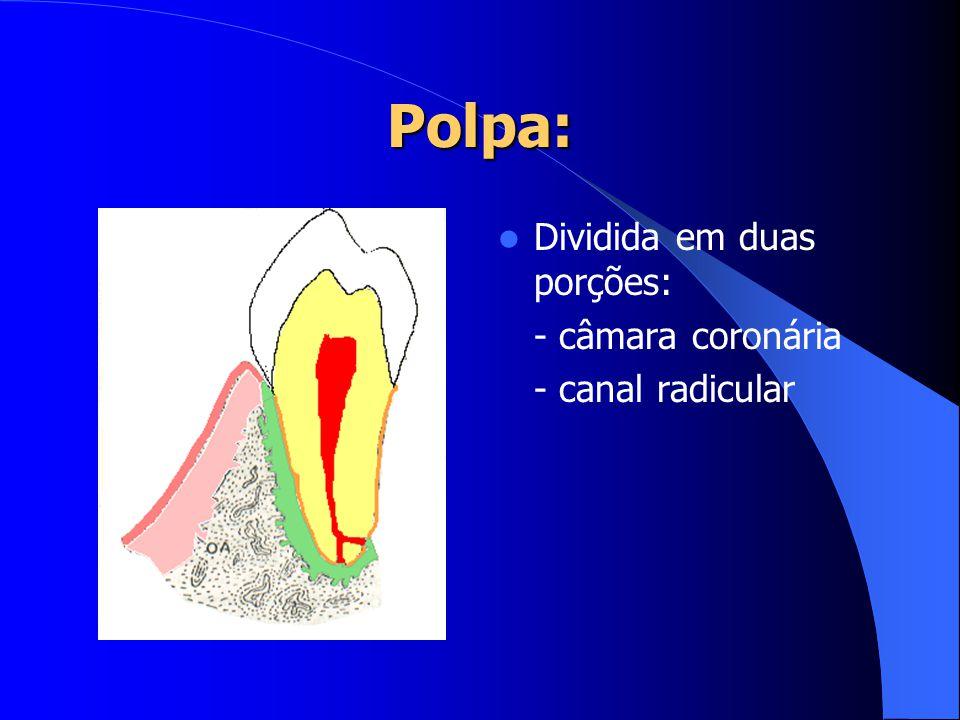 Polpa: Dividida em duas porções: - câmara coronária - canal radicular