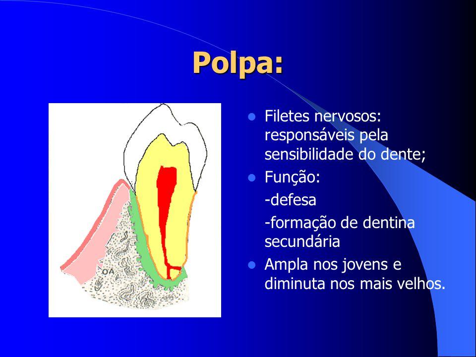 Polpa: Filetes nervosos: responsáveis pela sensibilidade do dente;
