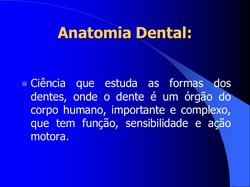 Anatomia Dental: