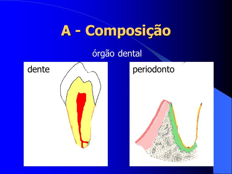 A - Composição órgão dental dente periodonto