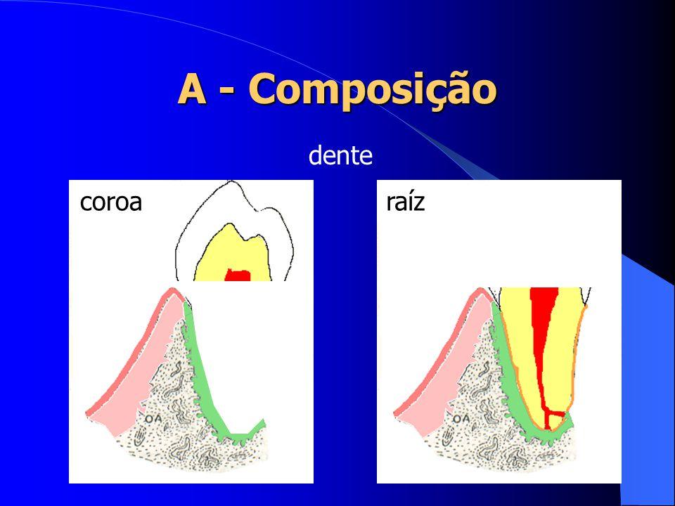 A - Composição dente coroa raíz