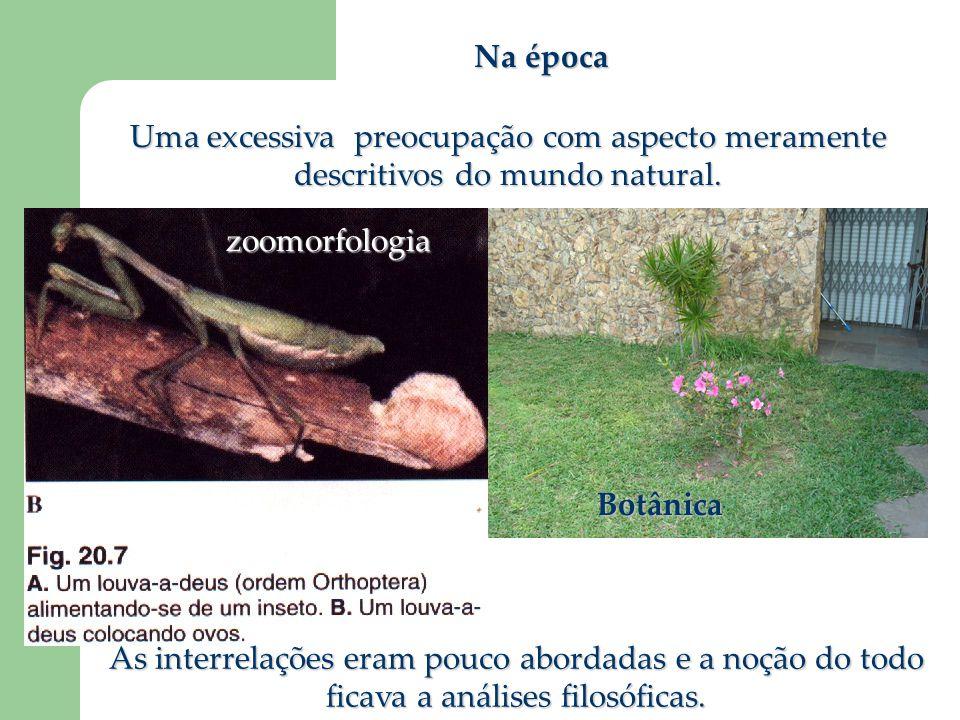 Na época Uma excessiva preocupação com aspecto meramente descritivos do mundo natural. zoomorfologia.