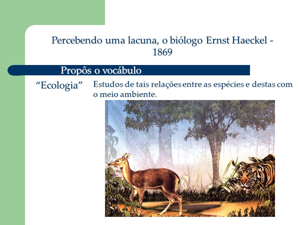 Percebendo uma lacuna, o biólogo Ernst Haeckel - 1869