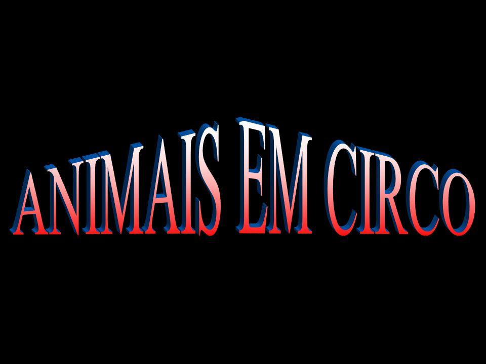 ANIMAIS EM CIRCO
