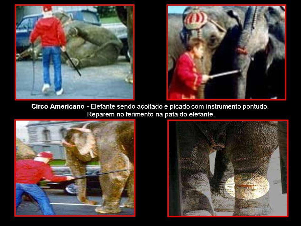 Reparem no ferimento na pata do elefante.