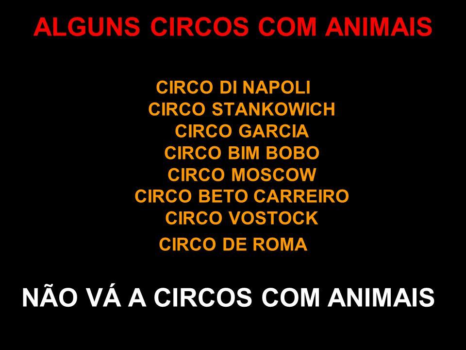 ALGUNS CIRCOS COM ANIMAIS