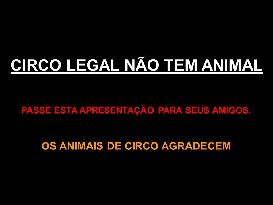 CIRCO LEGAL NÃO TEM ANIMAL