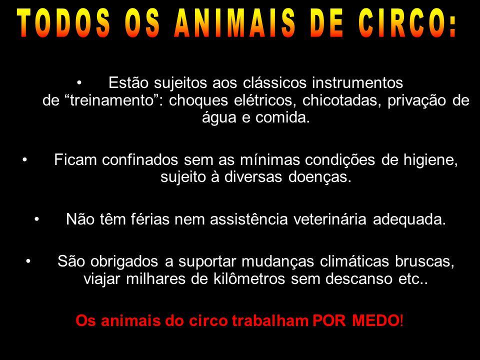 TODOS OS ANIMAIS DE CIRCO: