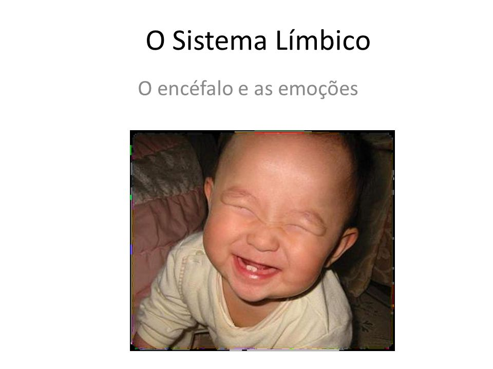 O Sistema Límbico O encéfalo e as emoções