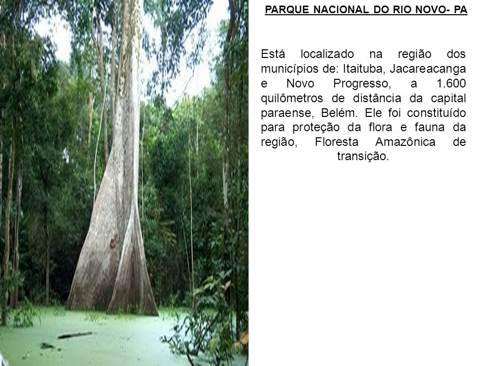 PARQUE NACIONAL DO RIO NOVO- PA