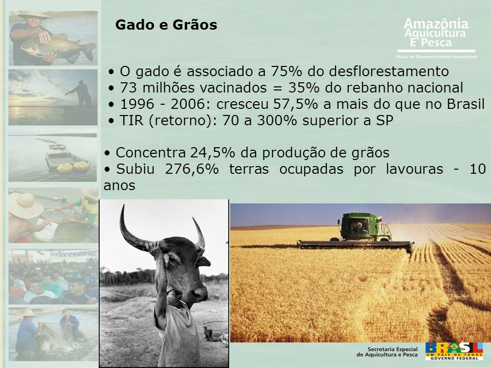 O gado é associado a 75% do desflorestamento