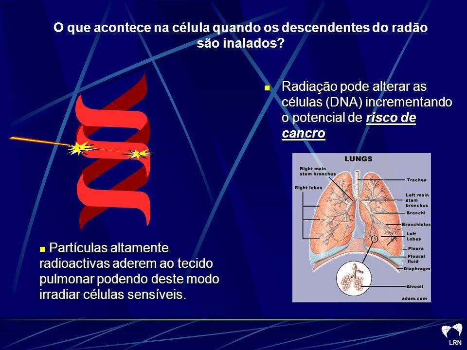 O que acontece na célula quando os descendentes do radão são inalados