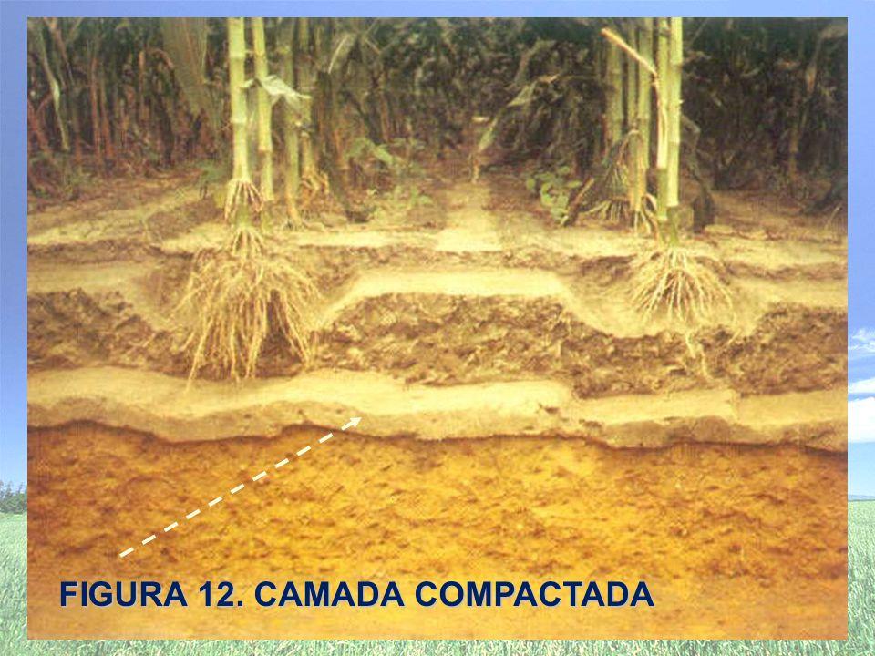 FIGURA 12. CAMADA COMPACTADA