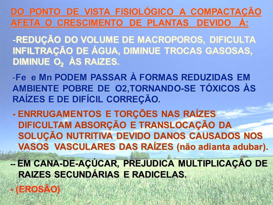DO PONTO DE VISTA FISIOLÓGICO A COMPACTAÇÃO