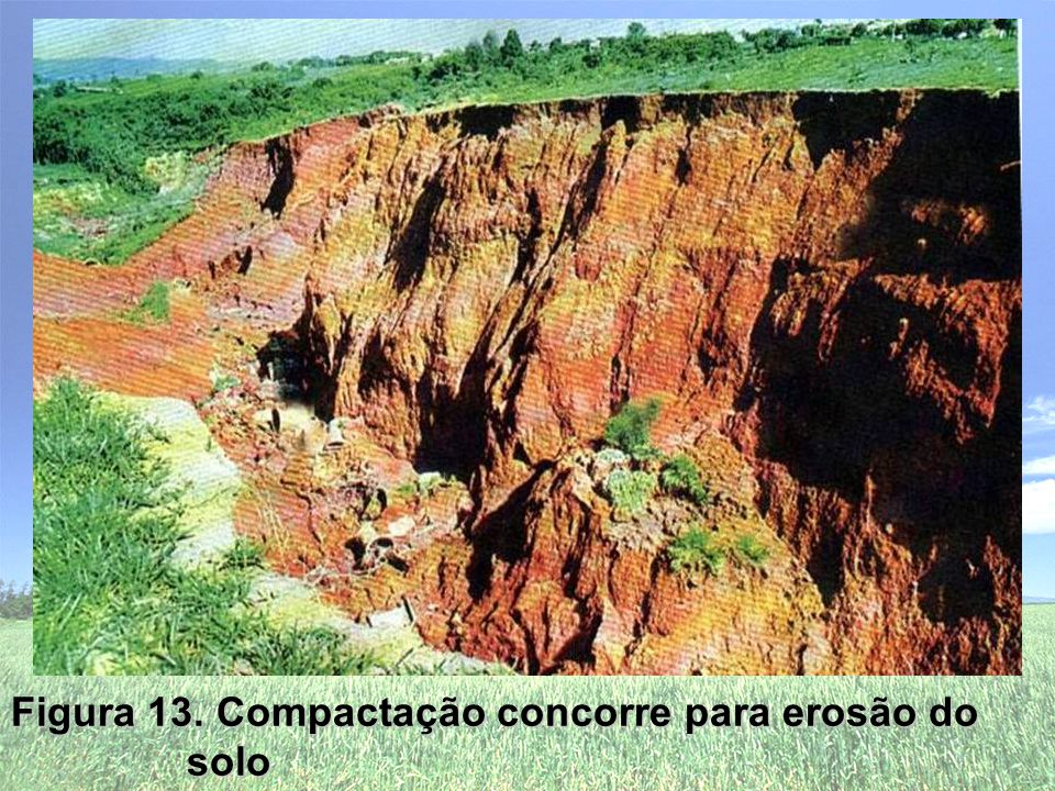 Figura 13. Compactação concorre para erosão do solo