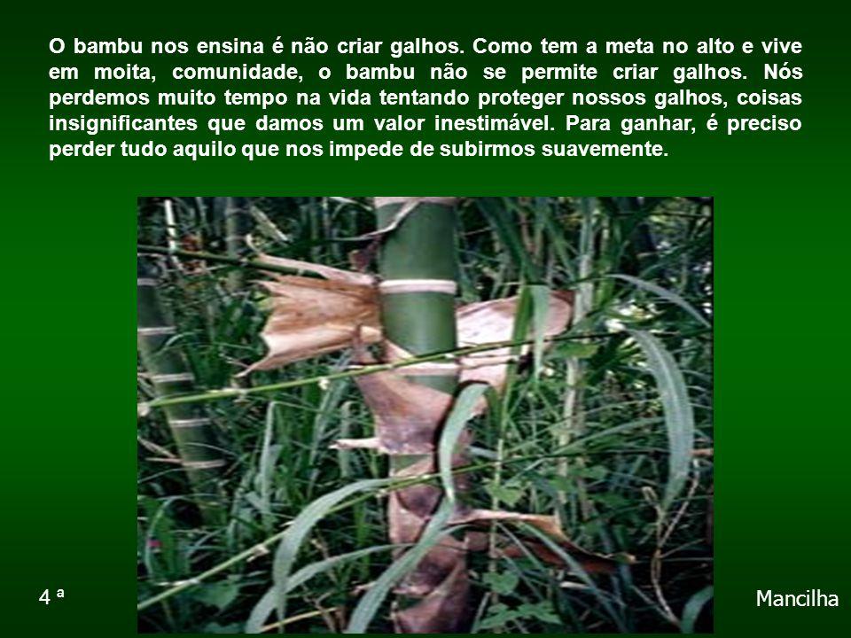O bambu nos ensina é não criar galhos