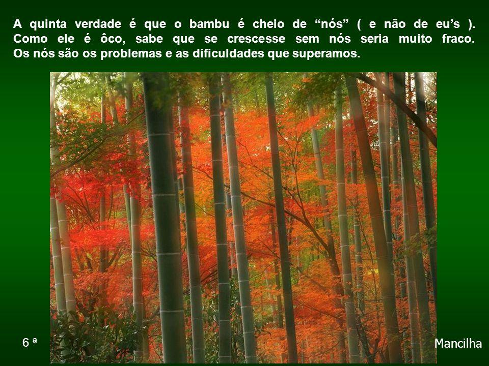 A quinta verdade é que o bambu é cheio de nós ( e não de eu's )