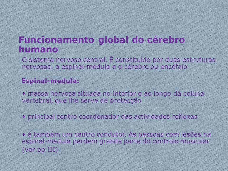 Funcionamento global do cérebro humano