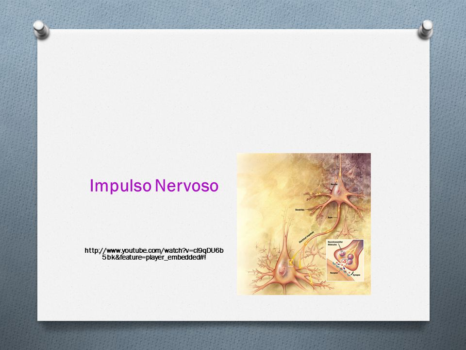 Impulso Nervoso http://www.youtube.com/watch v=cI9qDU6b5bk&feature=player_embedded#!