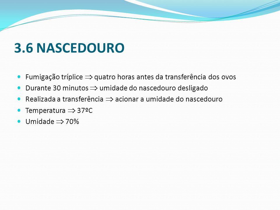 3.6 NASCEDOURO Fumigação tríplice  quatro horas antes da transferência dos ovos. Durante 30 minutos  umidade do nascedouro desligado.