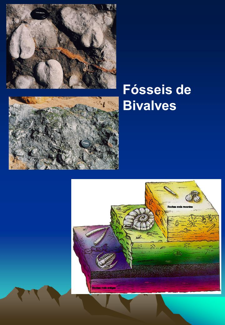 Fósseis de Bivalves