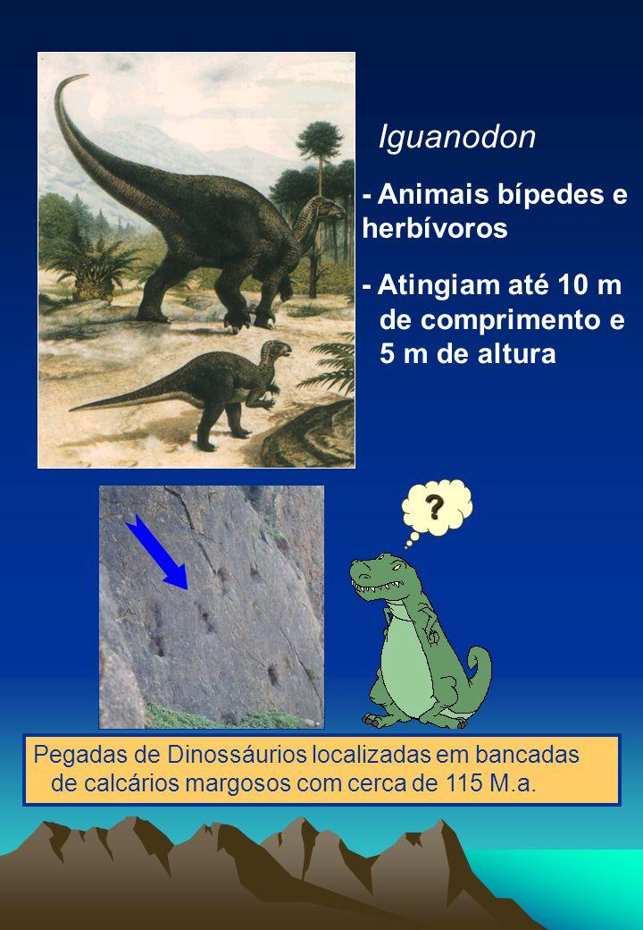 Iguanodon - Animais bípedes e herbívoros
