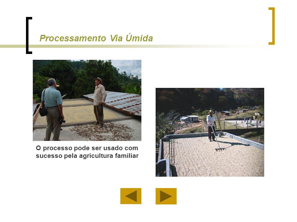 Processamento Via Úmida